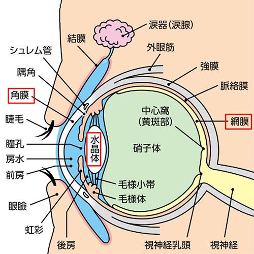 よくある眼の病気